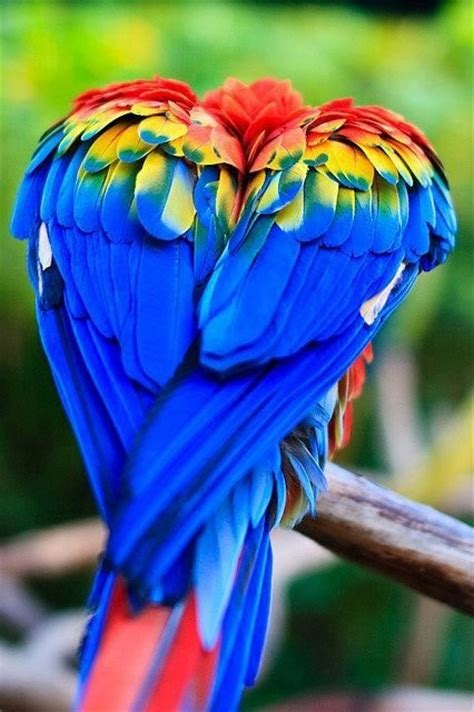 amazing beautiful colorful rainbow birds colorful and amazing creatures incredible