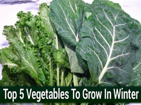 vegetables that grow in winter top 5 vegetables to grow in winter