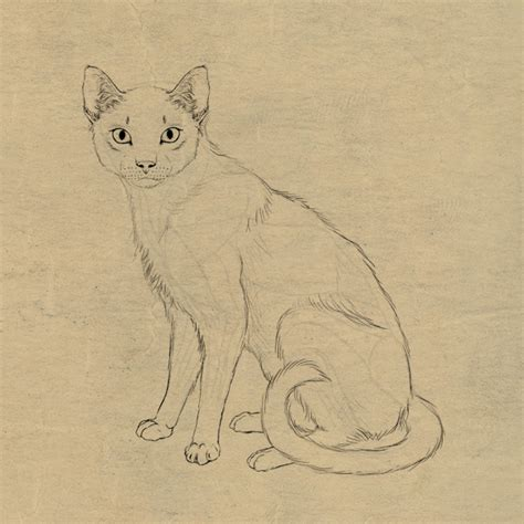 sketchbook cat air 40 simple cat drawing exles anyone can try