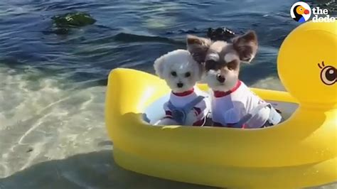 dogs float along on their boat youtube - Dog Boat Float