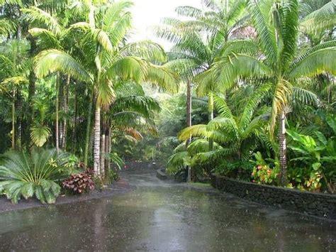 tropical backyard landscaping ideas 25 best ideas about tropical garden design on