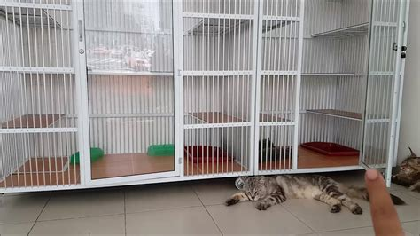 Kandang Kucing Ukuran kucingku selalu di kandangin gpp kan kak berapa ukuran