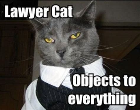 Cat Suit Meme - lawyer cat objects to everything lawyer jokes and law