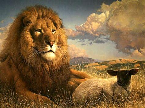 lion desk vs wise agent lion nice