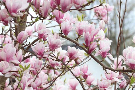 Pflanzen Halbschattig Winterhart by Bl 252 Hende Str 228 Ucher Winterhart Halbschatten Hono