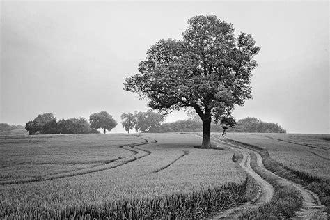 lone landscaping landscape lone tree field farm antonyz photography