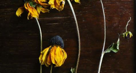 fiori secchi profumati fiori secchi profumati fiori secchi fiori secchi