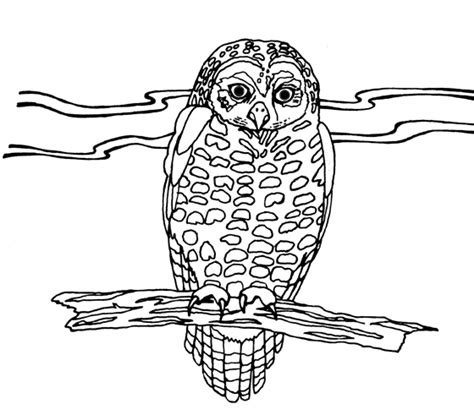 spotted owl coloring page geography blog mexican spotted owl coloring page