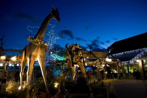denver zoo lights tickets win tickets to zoo lights mile high mamas