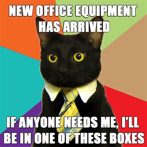 Office Cat Meme - administrative assistant day 7 reasons administrative