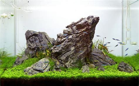 aquascape setup pin by ck yeo on planted tank pinterest aquariums