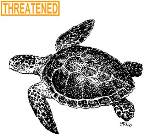 ct boating license age deep loggerhead sea turtle fact sheet