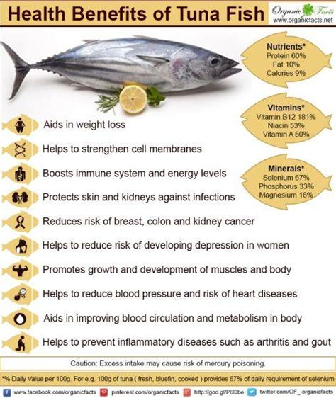 Health Benefits Of Fish by Health Benefits Of Fish Indiatimes