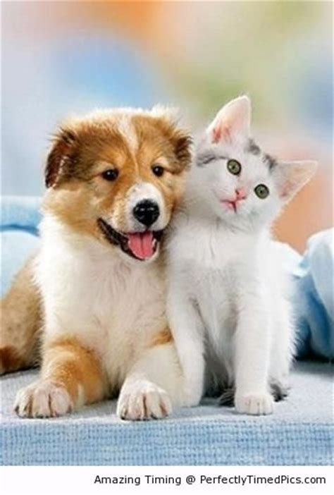 puppies and friends forever best friends the kitten and puppy can be best friends perfectly timed pics