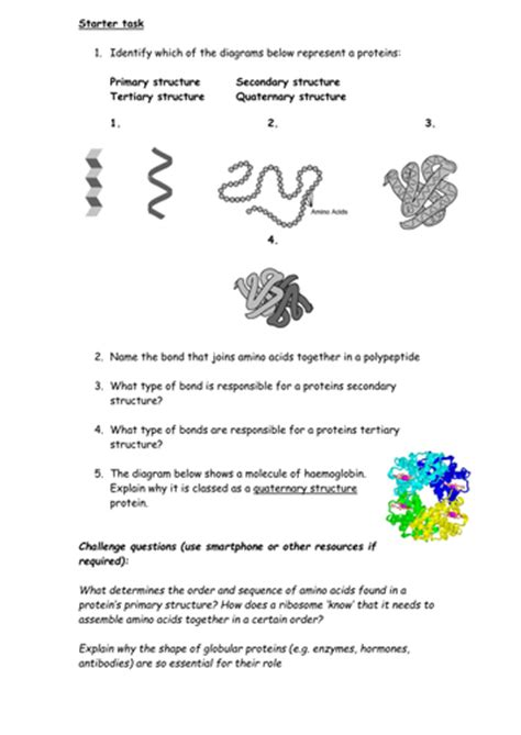 protein structure worksheet answers protein structure worksheet by cmrcarr teaching resources tes