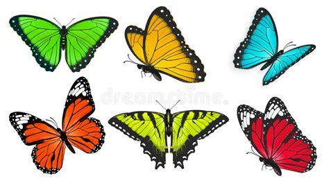 imagenes de mariposas realistas sistema de las mariposas realistas brillantes y coloridas