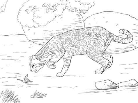 jaguarundi coloring page jaguarundi coloring page coloring pages