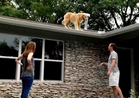 dog on a roof family puts up a sign to let neighbors know why their dog