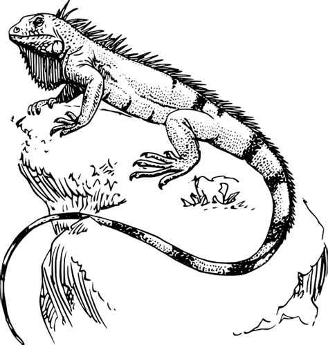 baby iguana coloring page imagenes y videos de tatuajes iguanas