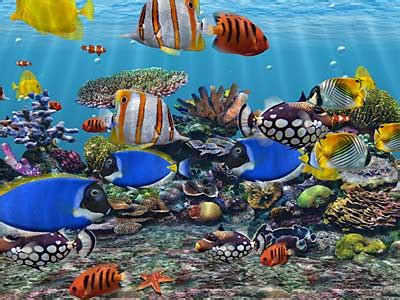 3d wallpaper water fish windows screensavers free 3d aquarium screensaver download
