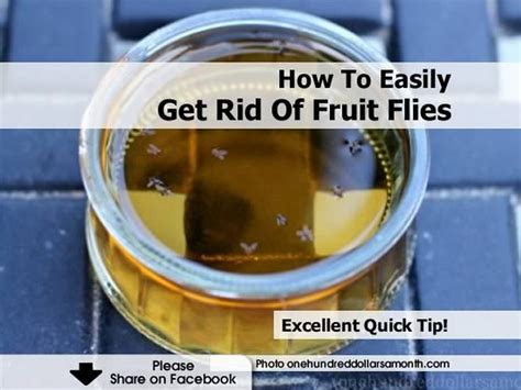 How To Get Rid Of Flies In The House by How To Easily Get Rid Of Fruit Flies
