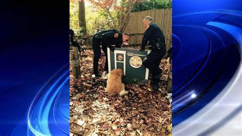 golden retriever rescue western ny save golden retriever who got stuck in cat house abc7chicago