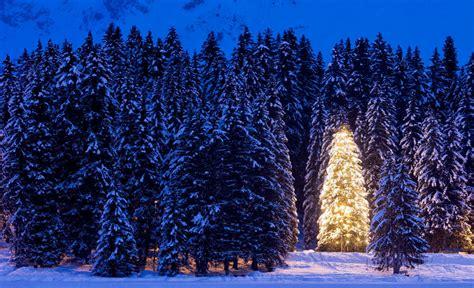 arboles navidad naturales 193 rboles de navidad 191 naturales o artificiales el regional