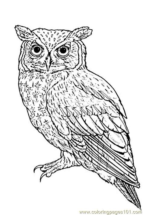 screech owl coloring page free coloring pages of f owls