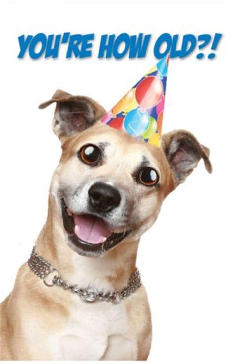happy birthday puppy images birthday quotes quotesgram