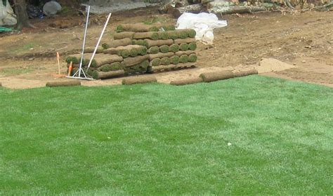 image gallery laying sod
