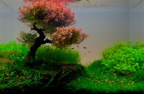 Aquascape Freshwater The Top 10 Most Beautiful Freshwater Aquascapes Of 2012