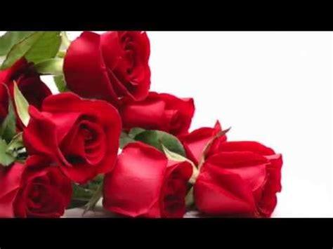 imagenes de rosas para mi amor reflexi 243 n rosas para mi amor youtube