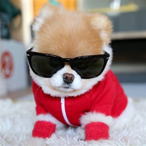 boo the dog christmas d 220 nyanin en tatli k 214 peği quot boo quot