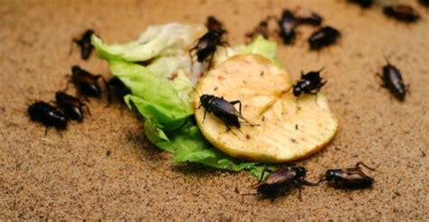 formiche volanti rimedi rimedi naturali per tenere lontano gli insetti la guida
