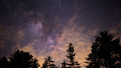 trees silhouette  starry sky wallpaper wallpaper