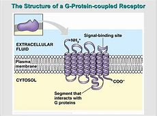 Cell Communication John Girard Project Opening Doors ... G Protein Coupled Receptors Diagram