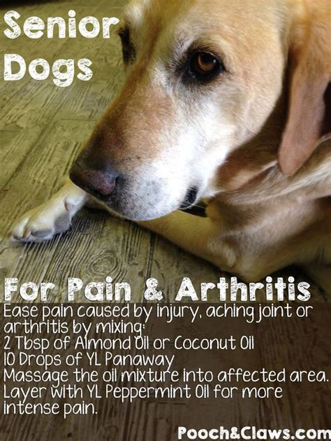 what to give dogs for arthritis senior dogs remedy for arthritis with essential oils recipe dogs a