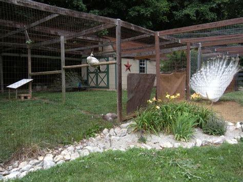 peafowl housing ideas images  pinterest peacock