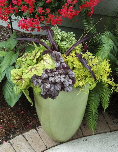 winter gardening perennials  containers  protection