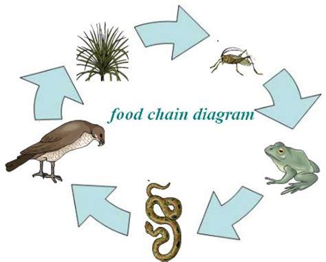 forest food chain diagram juliayunwonder tropical rainforest food web diagram