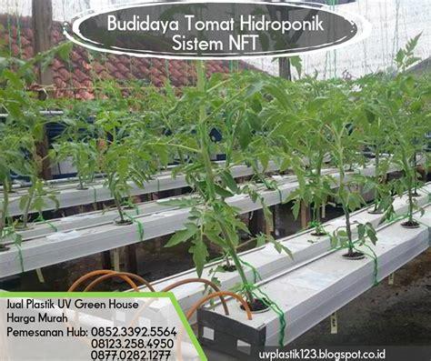 Jual Plastik Uv Hidroponik budidaya tomat hidroponik sistem nft pabrik dan