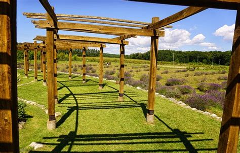 cherry point farm market lavender labyrinth picture of cherry point farm and