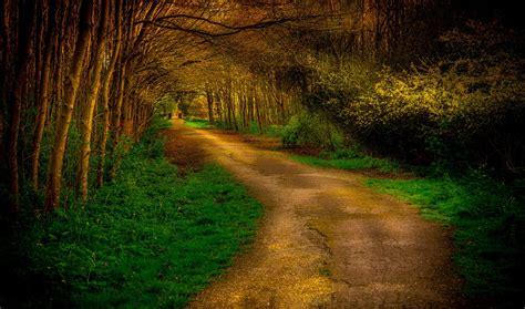 imagenes de paisajes y caminos banco de im 193 genes camino por el bosque paisajes de ensue 241 o