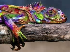 colorful animals 50 colorful animals photography inspiration photos