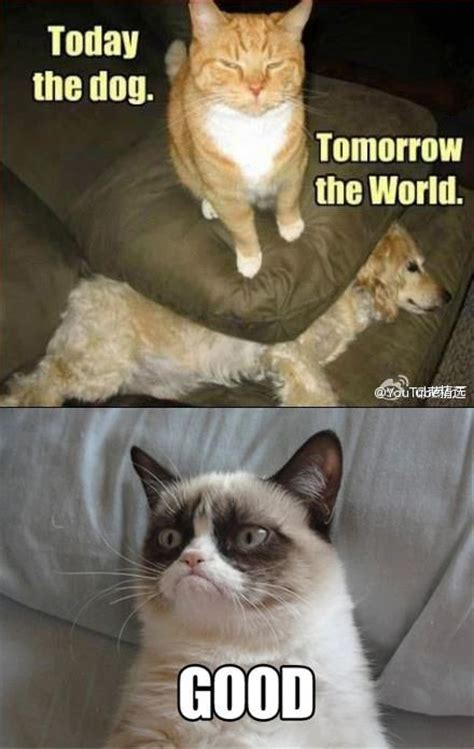Best Angry Cat Meme - 645 best images about cats grumpy cat on pinterest