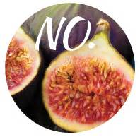 can dogs eat figs can my eat that modern magazine