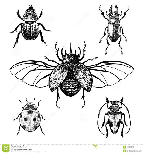 hand drawn beetles set stock vector image 59507012