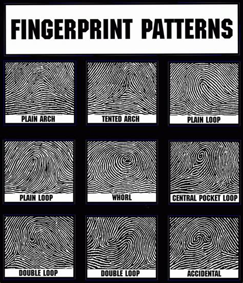 name the pattern unit for each picture of fingerprint patterns for crime display during