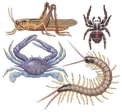 imagenes animales artropodos como s 227 o os animais invertebrados 4 passos umcomo