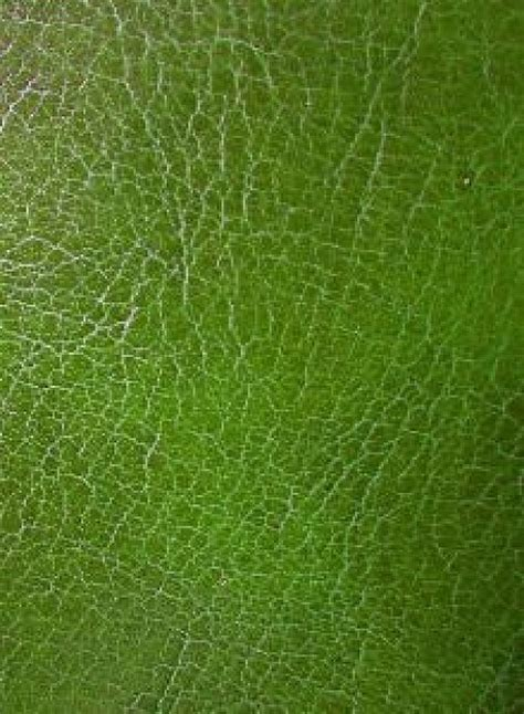 Green Leather by Green Leather Texture Photo Free